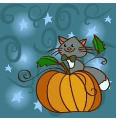 Cat on a pumpkin at the night sky with stars vector image