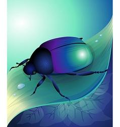 Blue beetle vector