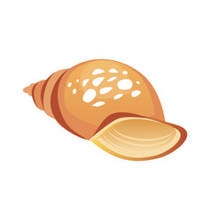 brown sea spiral seashell an empty shell of a sea vector image