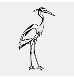Hand-drawn pencil graphics heron Engraving vector image