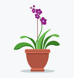 oriental purple orchid indoor plant in clay pot vector image