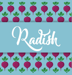 Radish vegetable icon vector