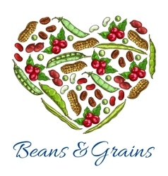 Beans and grains in heart shape vector
