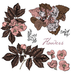 Hand drawn flowers in engraved style vector