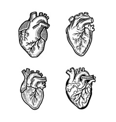 Heart human icon set hand drawn style vector