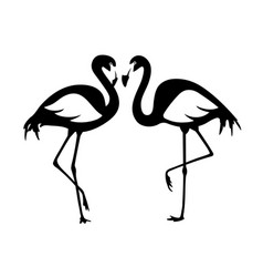 isolated flamingos pair black and white vector image