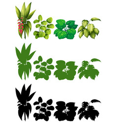 set of plant for decoration vector image