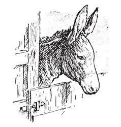 Donkey vintage vector
