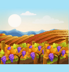 Peisage empty and filled with grape trees vector