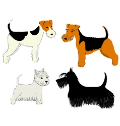 dogs breeds vector image vector image