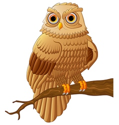 Cartoon owl sitting on the branch vector