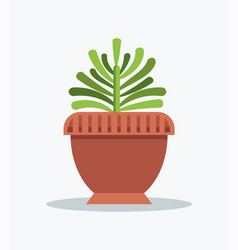 Exotic green yucca indoor plant in big clay pot vector