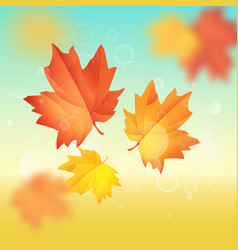 maple leaf hello autumn vector image vector image