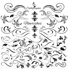 set of vintage styled calligraphic elements vector image