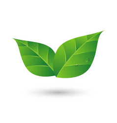 Green leaf with water drop eco friendly concept vector image vector image