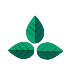 Flat leaves green plant eco vector image