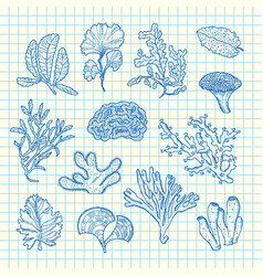 hand drawn seaweed set vector image
