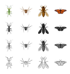 Insect and fly sign set of vector