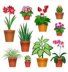 room plants vector image