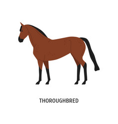 Thoroughbred horse flat vector