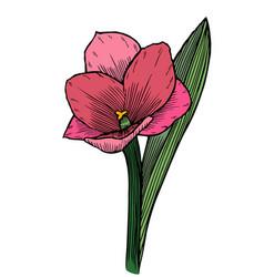 hand drawn flower vector image