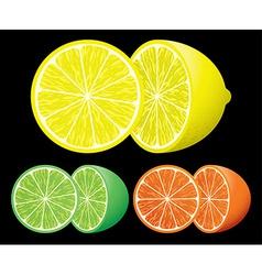 Set of citrus fruits vector image
