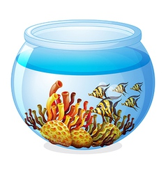 An aquarium with fishes vector image