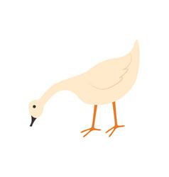 goose eating food farming domestic animal vector image