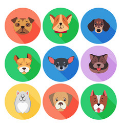 Set of pedigreed dogs on colored circle icons vector
