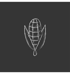 Corn Drawn in chalk icon vector