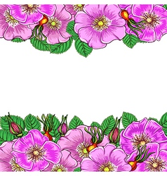 floral background with flowers rosehip vector image