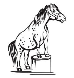 Standing pony vector