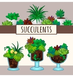 Succulents in pots vector image