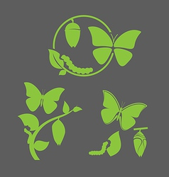Butterfly cycle vector image