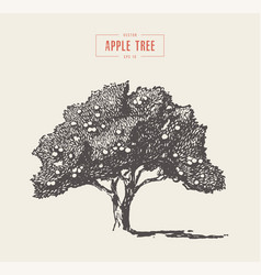 High detail vintage apple tree drawn vector