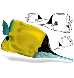 Longnosed Butterflyfish Set vector image