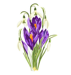 Purple spring crocus and snowdrops flowers vector