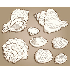 Seashell set in vintage style vector image vector image
