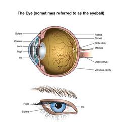 the eye vector image vector image