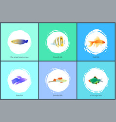 Gold fish and blue tamarin set vector