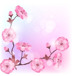 Spring cherry flowers natural background vector image vector image