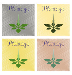 Assembly flat shading style icon plant plantago vector