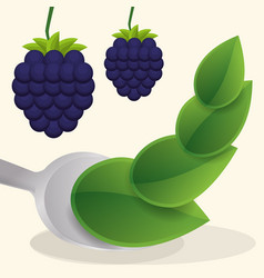 Blueberry vegan fruit fresh food vector