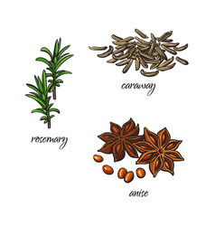 Flat sketch spices condiments herbs set vector