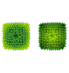 full square green leaves frame vector image