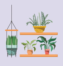 houseplants in macrame hangers and shelfs vector image