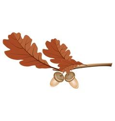 Oak leaves with acorns vector