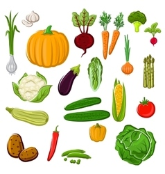 Farm vegetables for agriculture design vector