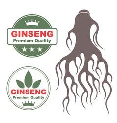Ginseng vector
