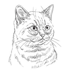 Hand drawing cat 7 vector